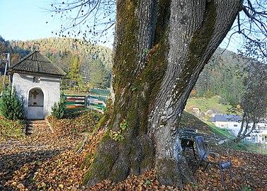 2 Sommer-Linden in der Gemeinde Zell Pfarre, Bezirk Klagenfurt Land, Kärnten.jpg