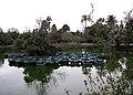 355 Parc de la Ciutadella, l'estany.JPG