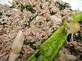 4087Ants Common houseflies foods delicacies of Bulacan 22.jpg