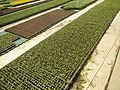 5904Farm Ready Seedling Facility East West Seed Philippines 21.jpg