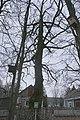 68-206-5001 Дуб звичайний, Корабельна роща.jpg