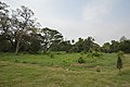 AJC Bose Indian Botanic Garden - Howrah 2018-04-01 2309.JPG