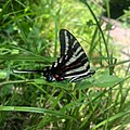 A butterfly at Champ Park in Old Jamestown, Missouri.jpg