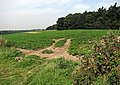 A crop of peas - geograph.org.uk - 943944.jpg