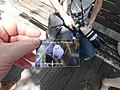 A friendly birdwatcher's big camera, and URL, 2016 07 03.JPG - panoramio.jpg