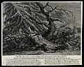 A group of four ferrets (viverra) near a tree trunk. Etching Wellcome V0021001.jpg