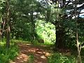 A hiking trail at Free Spirit Campground and Recreation Center in Landisburg, Pa- 2014-06-20 02-14.jpg