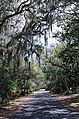 A path in Florida.jpg