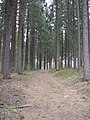 A path in a forest near Myllykoski (05-2007) - panoramio.jpg