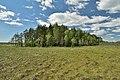 A plot of forest vegetation.jpg