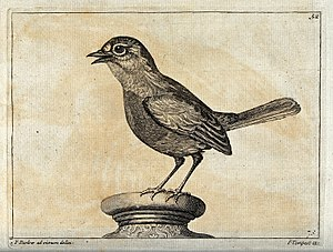 Animal painter - Image: A sparrow. Engraving by P. Tempest, ca. 1690, after F. Barlo Wellcome V0022146