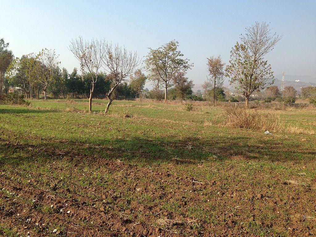 fertile land - photo #16