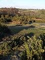 Access land, Clannaborough - geograph.org.uk - 1712381.jpg