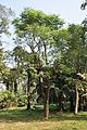 Acharya Jagadish Chandra Bose Indian Botanic Garden - Howrah 2011-01-08 9845.JPG
