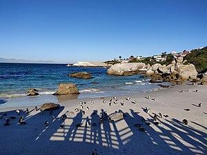 588d4594 African penguins on Boulders Beach.