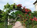 Allée de roses Jardin des Plantes.JPG