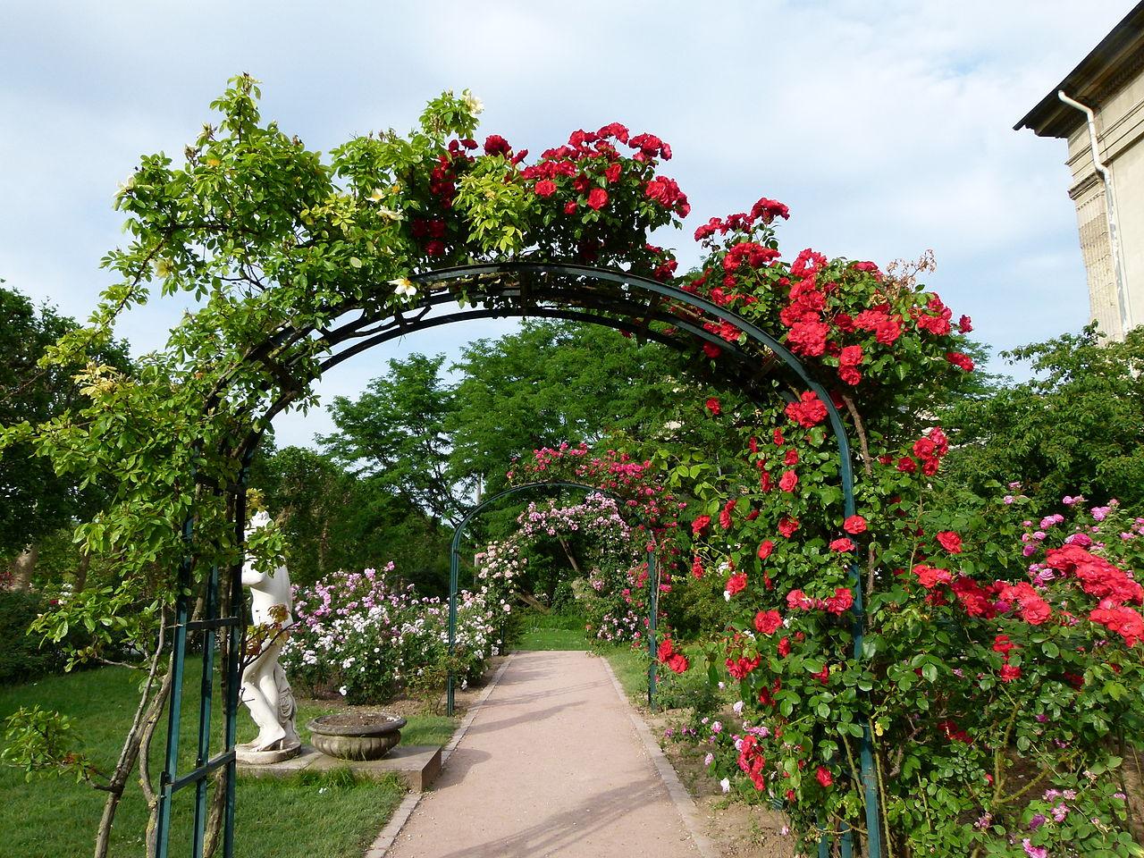 File all e de roses jardin des plantes jpg wikimedia commons - Jardin des plantes rouen adresse ...