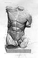 Alphonse Lami; echorche torso, 1861 Wellcome L0025113.jpg