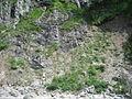 Alpii Ammergau2.jpg
