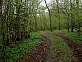 Altenbrak Wald Frühling.JPG