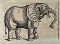 An elephant. Woodcut after C. Gessner. Wellcome V0021192.jpg
