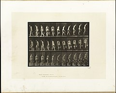 Animal locomotion. Plate 102 (Boston Public Library).jpg