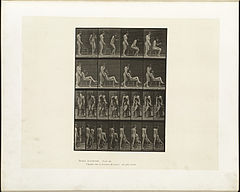Animal locomotion. Plate 239 (Boston Public Library).jpg