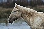 Animales-aiguamolls l'emporda-2013 (9).JPG
