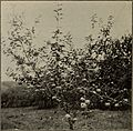 Annual report of the Fruit Growers' Association of Ontario, 1902 (1903) (14769937145).jpg