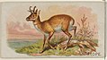 Antelope, from the Quadrupeds series (N21) for Allen & Ginter Cigarettes MET DP835099.jpg