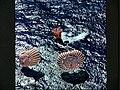 Apollo-16-Landing.jpg