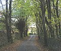 Approaching the top of Bryn Bras Hill - geograph.org.uk - 270582.jpg