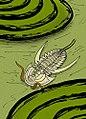 Archaeaspis hupei recon.jpg