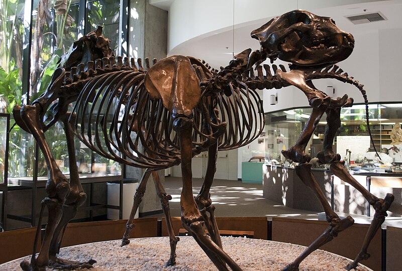 ArctodusSimusSkeleton.jpg