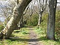 Ardardan - Woodland Walks - geograph.org.uk - 974707.jpg