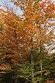 Arethusa Falls Rd, Hart's Location - panoramio (1).jpg