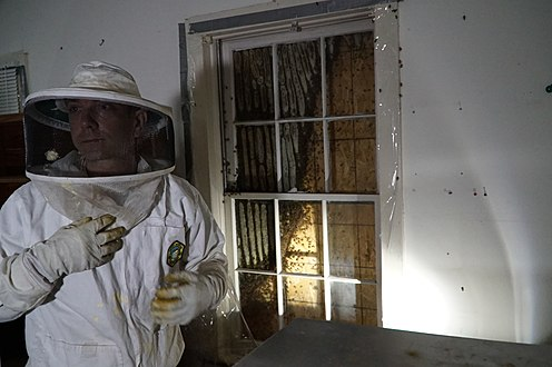 Arlington Rescues Thousands of Bees - 36187850902.jpg