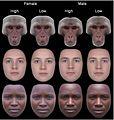 Attracive-faces-symmetry.jpg