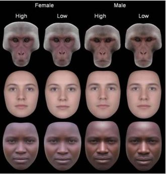 Developmental homeostasis - Symmetry of female and male faces. Those with high symmetry appear more attractive than low.