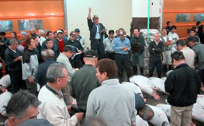 קובץ:Auction Tsukiji fishmarket.jpg