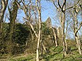 Auldhame - geograph.org.uk - 1214023.jpg