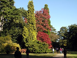 Autumn.scene.at.westonbirt.arp.jpg