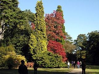 Westonbirt Arboretum Arboretum in Gloucestershire