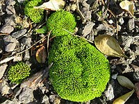 Autumn Leaves and Moss-6137.jpg