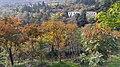Autumn season in Butanic Garden فصل پاییز در باغ بوتانیکال تفلیس 08.jpg