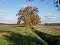 Autumnal scene - geograph.org.uk - 1043187.jpg