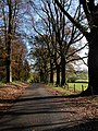 Avenue of trees by Clanna Lodge - geograph.org.uk - 285409.jpg