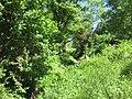 Bach, 2, Lauenförde, Landkreis Holzminden.jpg