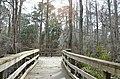 Bald Cypress Trail First Landing State Park-boardwalk-sun flare (33051852962).jpg