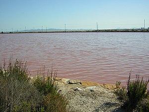 Balsa rosada en las salinas de san pedro del pinatar.jpg